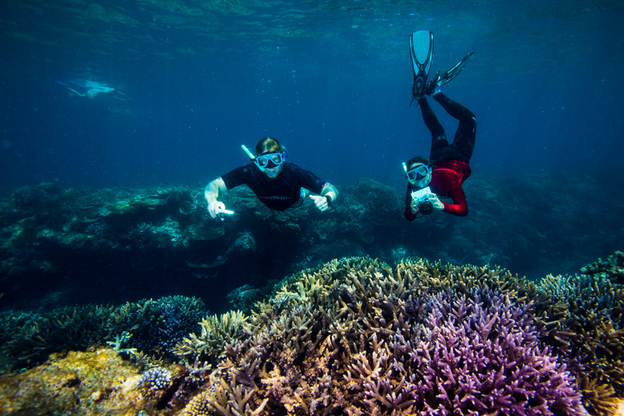 Out of the Box Solutions to Barrier Reef Destruction Live On